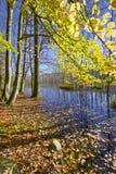 Marais dans la forêt Photo libre de droits