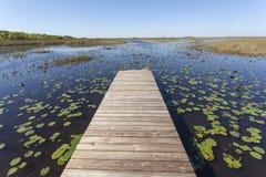 Marais dans les marais parc national, la Floride Photographie stock