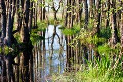 Marais de Biebrza Photographie stock libre de droits