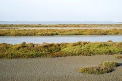 Marais de Camargue image libre de droits