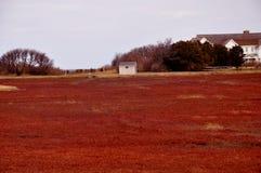 Marais de canneberge de morue de cap Image libre de droits
