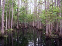 Marais de Cypress images libres de droits