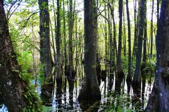 Marais de Cypress Photographie stock