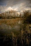 Marais de fleuve de Rhin Images libres de droits