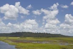 Marais de Kaw royaltyfria bilder
