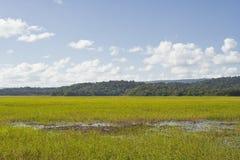 Marais de Kaw arkivfoto