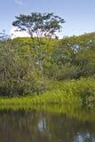 Marais de Kaw royaltyfria foton