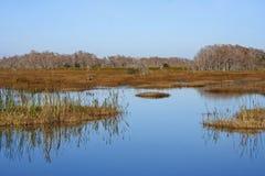 Marais de la Floride Images stock
