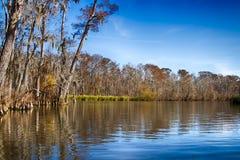Marais de la Nouvelle-Orléans Images stock