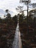 Marais de Latvain Photo libre de droits