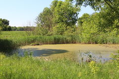 Marais de marais Photographie stock libre de droits