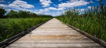 Marais de montage en étoile dans le Canada intérieur d'Ontario Photo stock