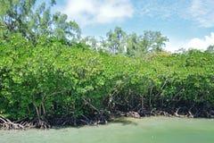 Marais de palétuvier chez Ile Cerfs aux., Îles Maurice Photographie stock