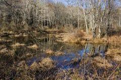 Marais de région boisée de faune Photos stock