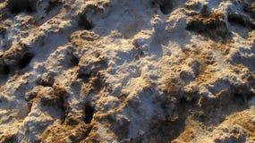 Marais de sel Photo libre de droits