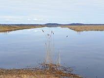 Marais de sel pendant le printemps sur Plum Island Photographie stock libre de droits