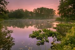 Marais de source de ressort au lever de soleil Photo libre de droits