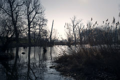 Marais en automne Lac foncé frais dans la forêt primitive Photo libre de droits
