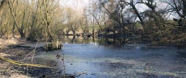 Marais en automne Refroidissez le lac foncé dans le paysage mélancolique froid de forêt primitive Photo stock
