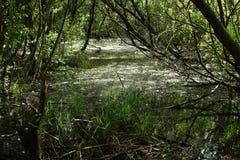 Marais en parc national Langdonken en Belgique photo stock