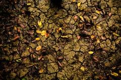 Marais et feuilles Image libre de droits