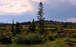 Marais et forêt en été Images stock