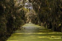 Marais et mousse verts Photos libres de droits