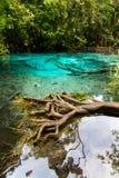 Marais Krabi vert Thaïlande Photos libres de droits