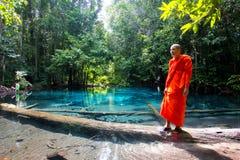 Marais Krabi vert Thaïlande Images libres de droits