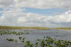 Marais - la Floride Photos stock