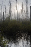 Marais le matin brumeux photo stock