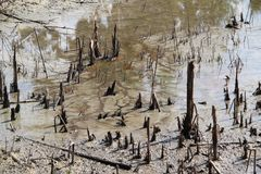 Marais Muddy Soil Images stock
