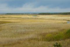 Marais ou zone humide ouverte Photos stock