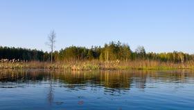 Marais Rushy dans l'horizontal de forêt Photos stock