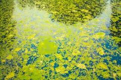 Marais sauvage de marais Images libres de droits