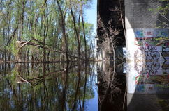 Marais sous le pont photos stock