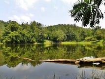 Marais sur la montagne, Thaïlande Image stock