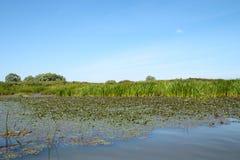 Marais sur la surface d'herbes Image stock