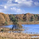 Marais tranquilles avec une colonie d'oiseau en automne, Turnhout, Belgique Image stock