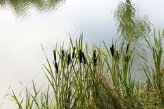 Marais vert, plan rapproché photos stock
