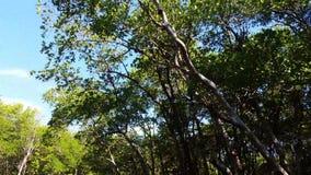 Marais ville, la Floride, Etats-Unis Visites d'Airboat à la forêt de palétuvier banque de vidéos