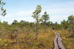 Marais Viru en nature d'Estonia.The de l'Estonie. Images stock