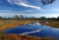 Marais Viru en nature d'Estonia.The de l'Estonie. Photographie stock libre de droits