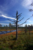 Marais Viru en nature d'Estonia.The de l'Estonie. Photo stock