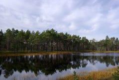 Marais Viru en nature d'Estonia.The de l'Estonie. Images libres de droits
