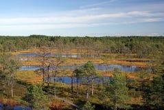 Marais Viru en nature d'Estonia.The de l'Estonie. Image stock