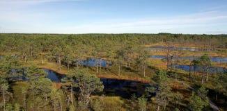 Marais Viru en nature d'Estonia.The de l'Estonie. Image libre de droits