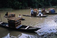 marajo острова Амазонкы Бразилии Стоковые Фото