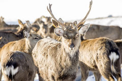 Marals dans Kazakhstan Photos libres de droits