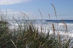maram травы стоковое фото